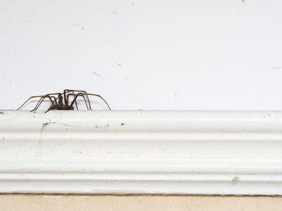 Get Rid Of Spiders In Your Home Spider Control