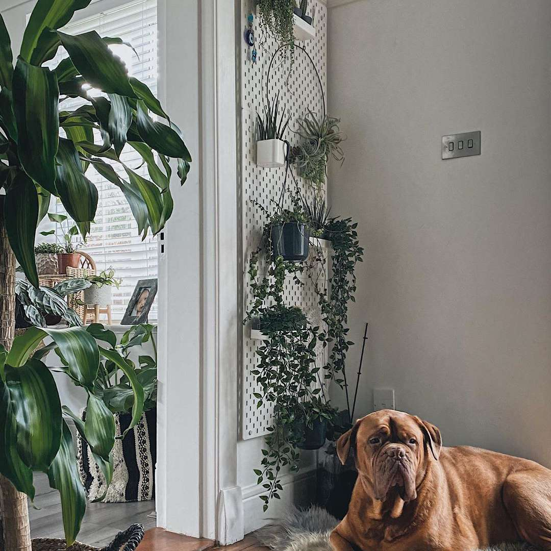 Living room with lots of plants