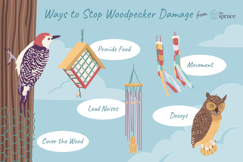 stop woodpecker damage
