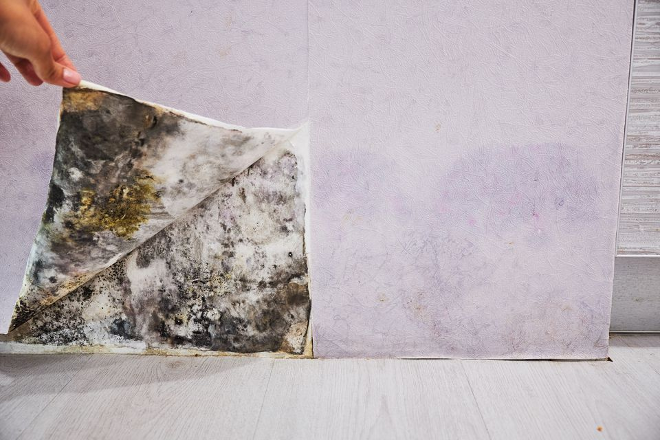 Woman lifting corner of wallpaper to reveal black mold
