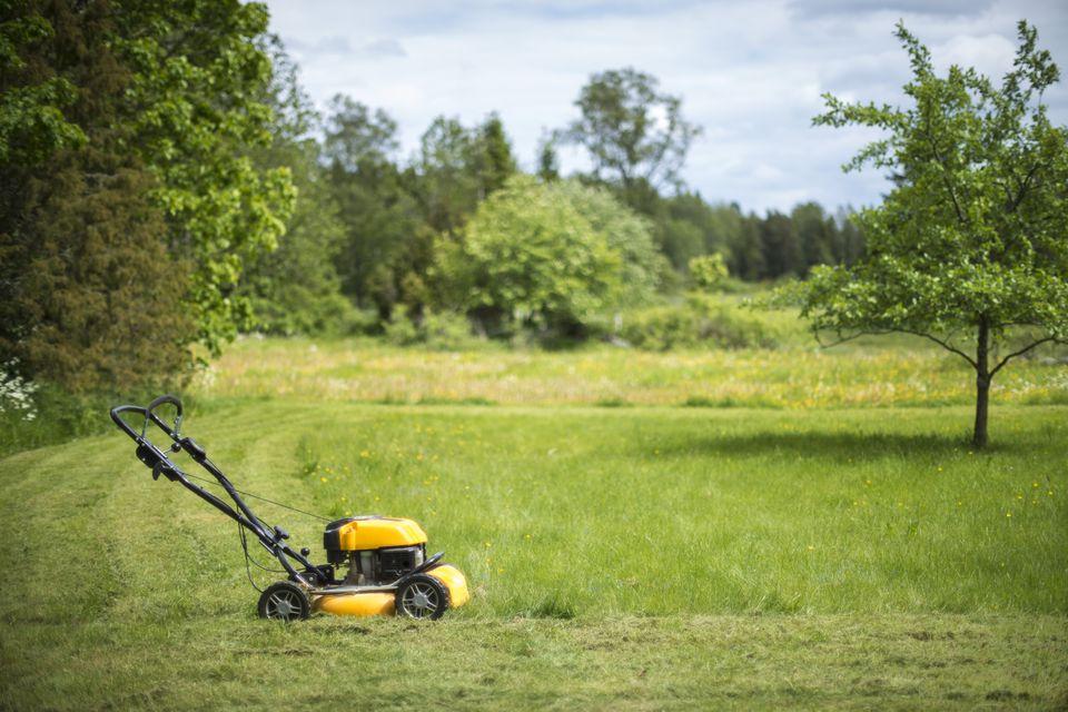 Lawn mower in garden