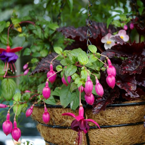 container gardening picture of hanging basket