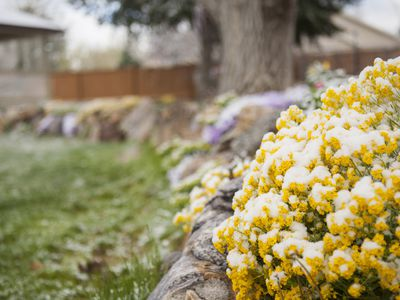 Close-up of spring garden in backyard, covered in snow, USA