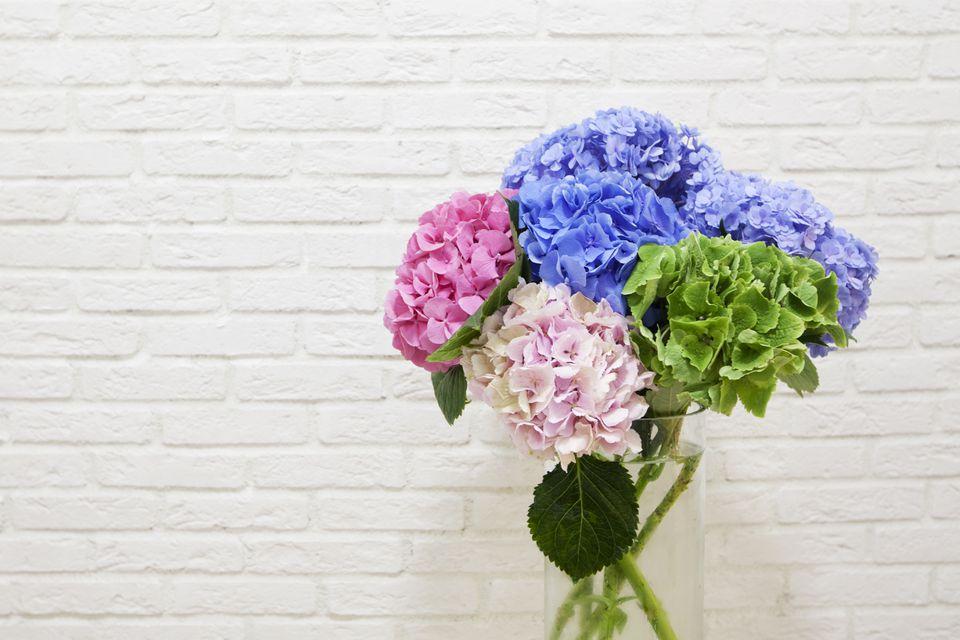 The bouquet of multi colored hydrangeas