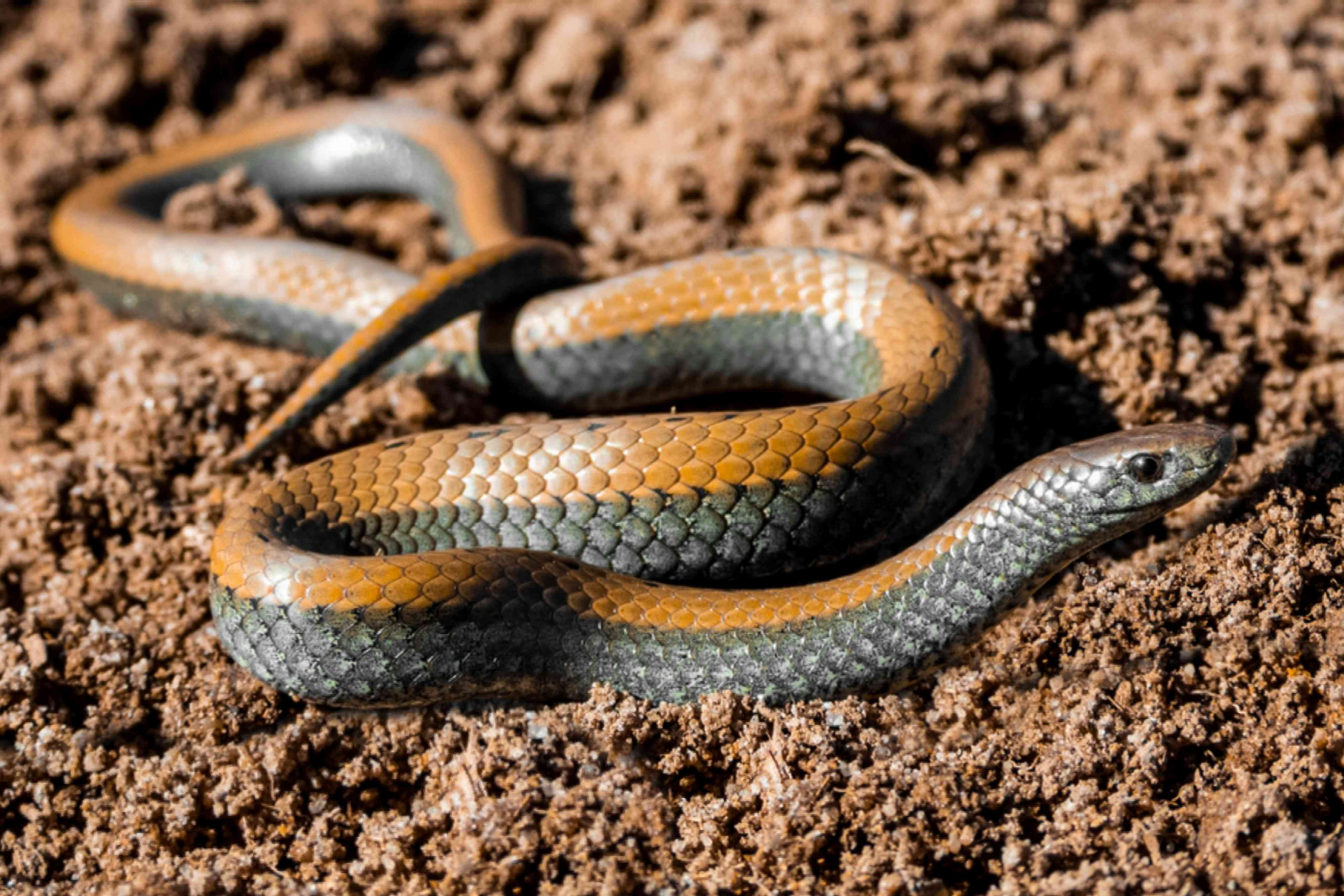 allowing good snakes to stay