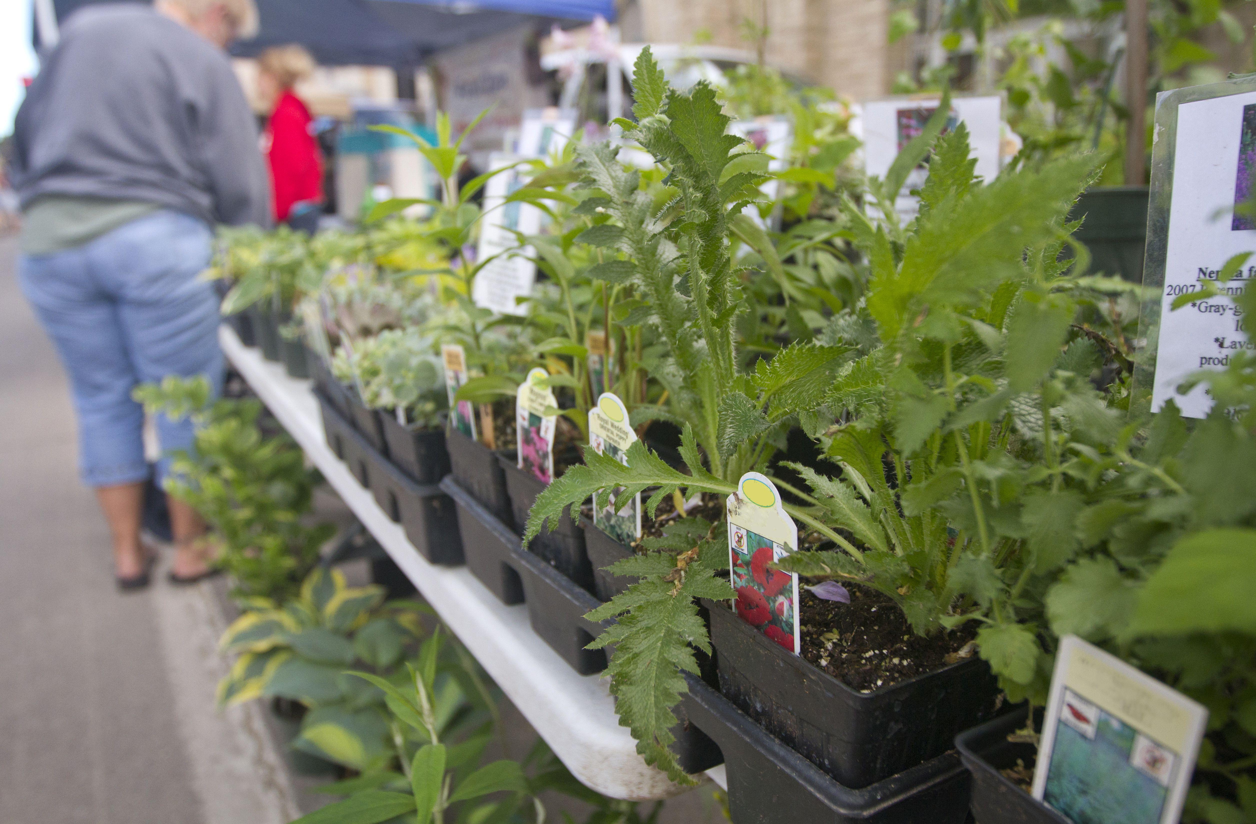Plantas en el mercado de Famer