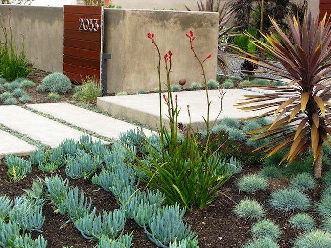 Succulents and grasses planted by low stone stairs and concrete structure