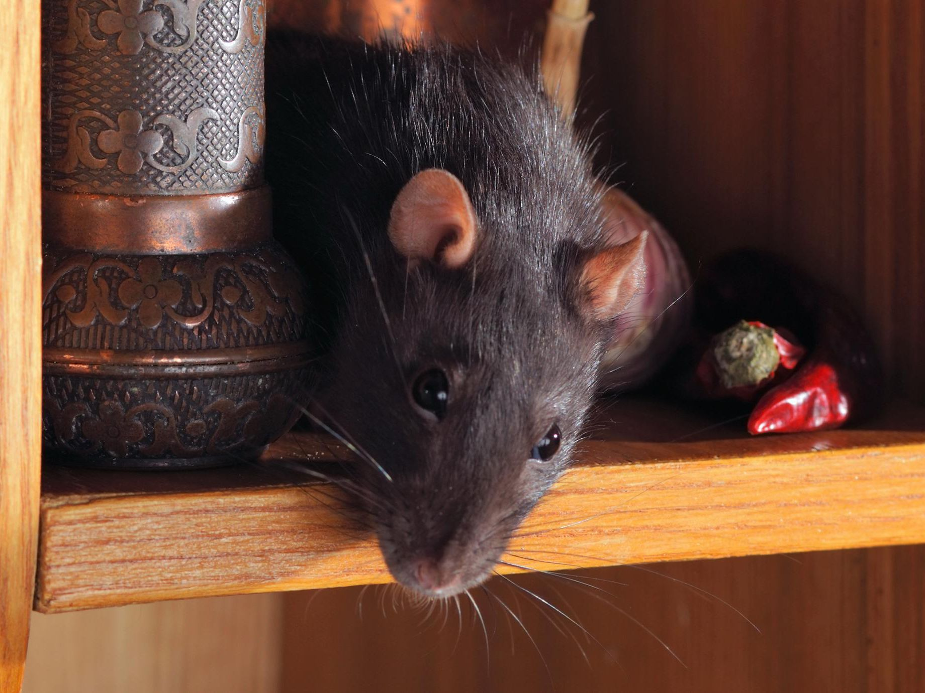 The 5-Second Trick For Best Ways To Treat Rats