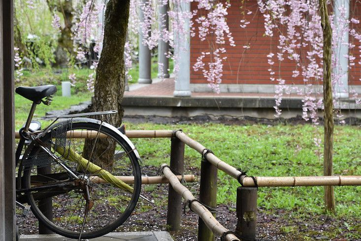 Bamboo fence with brick building in background, and cherry blossoms with bicycle in foreground