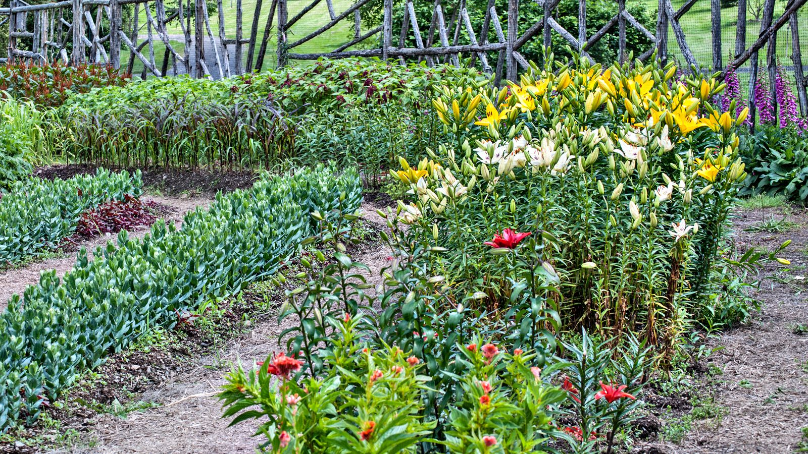 How To Plan And Grow A Cutting Garden