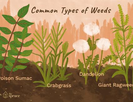 Identifying 12 Common Poisonous Plants