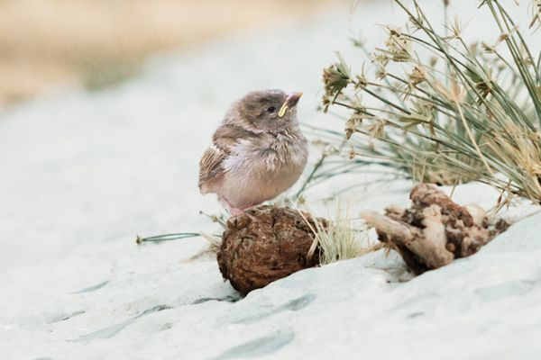 baby bird in the desert