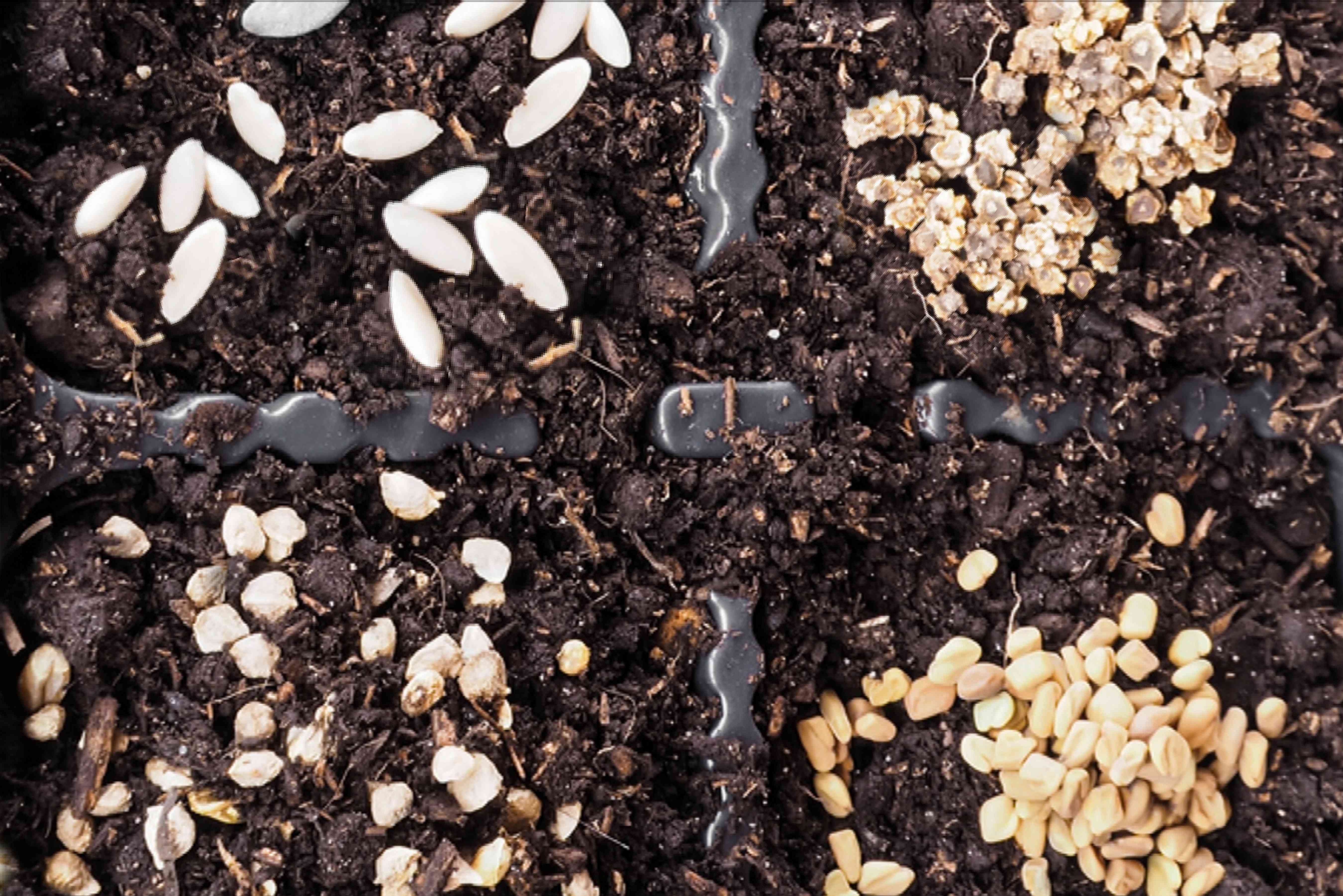 direct seed sowing