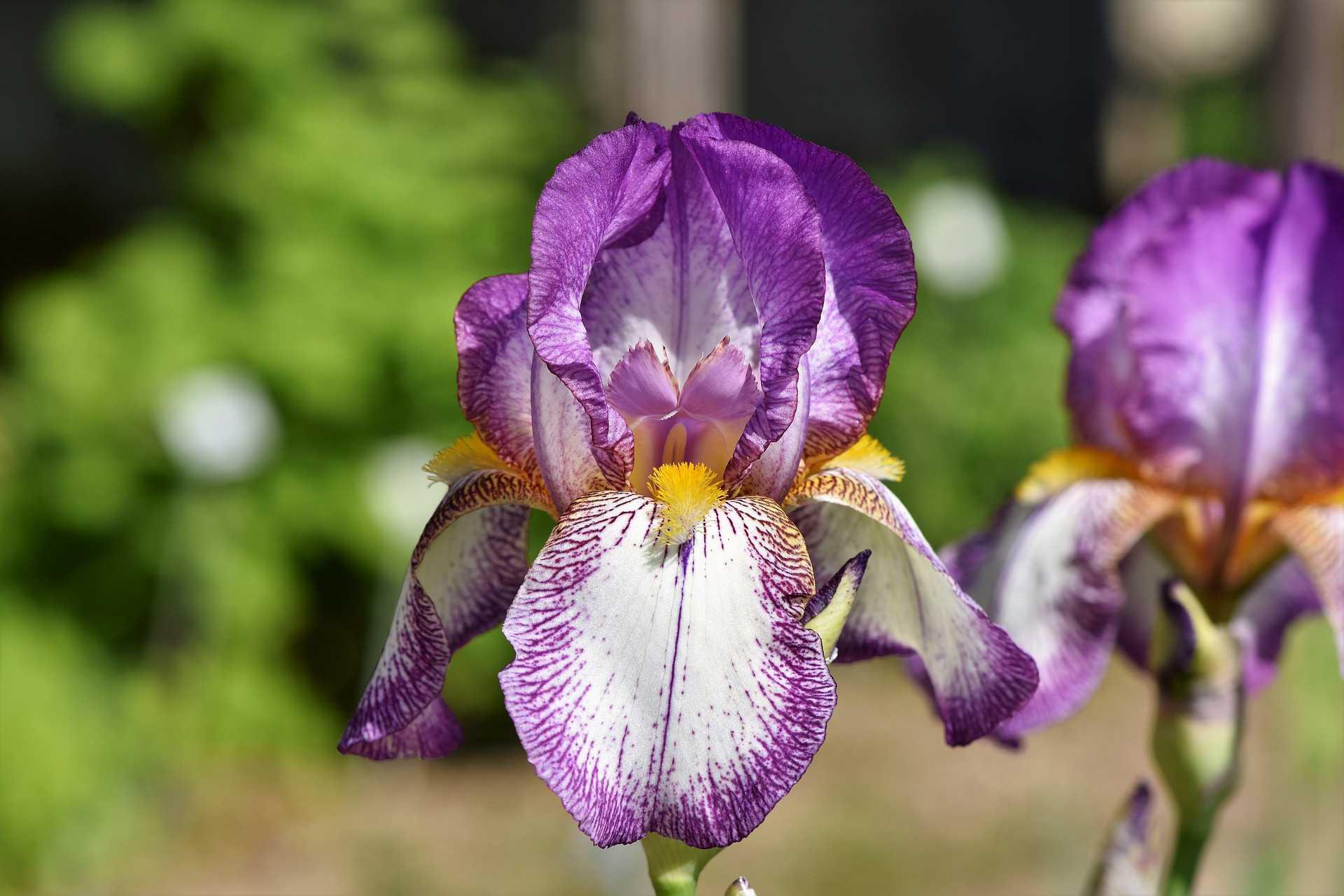 Best flowers for allergy sufferers izmirmasajfo