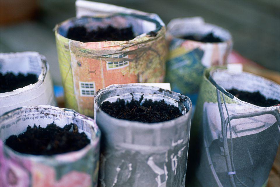 Semillas plantadas en contenedores de periódico enrollados.