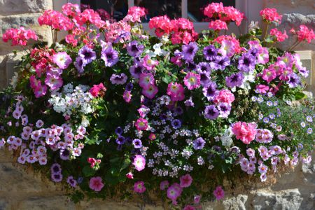 Get Curbside Eal With Window Box Flowers
