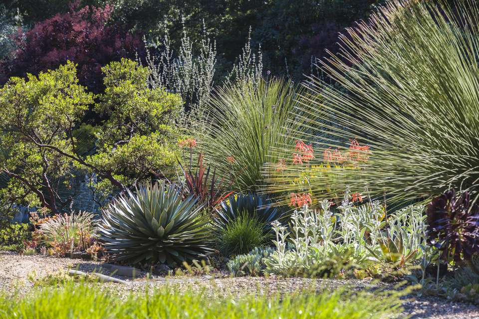 The 16 Best Drought Tolerant Plants For Landscaping