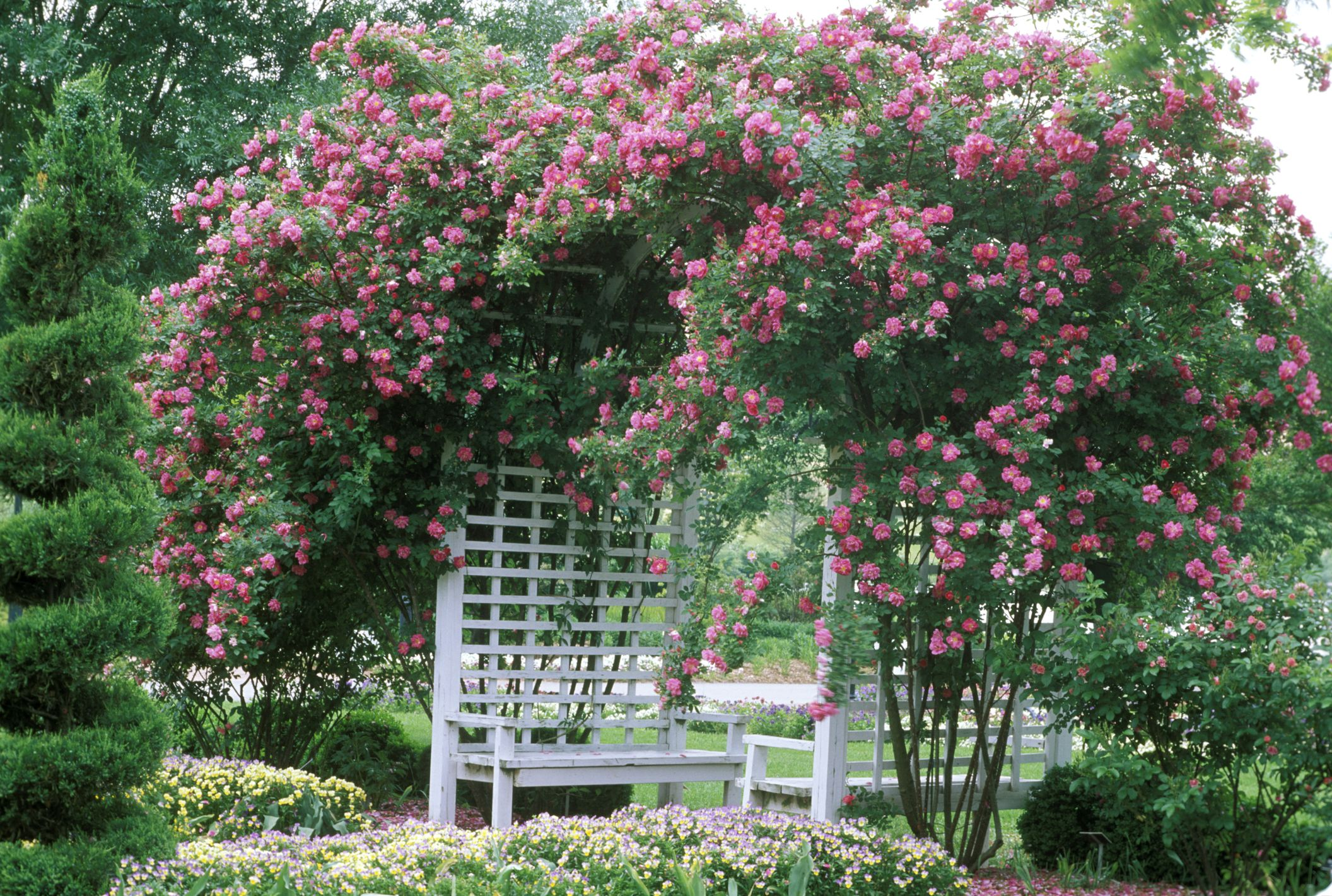 Rose Arbor with Bench