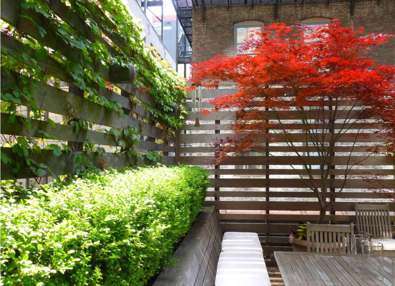 Rooftop vertical garden climbing the walls near a maple tree.
