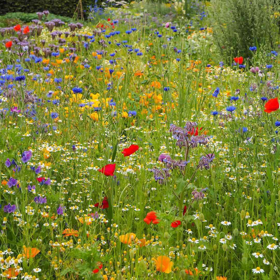Colorful annual flowers in a meadow setting