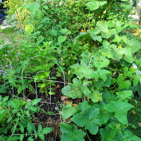 container gardening picture of straw bale garden - Straw Bale Garden