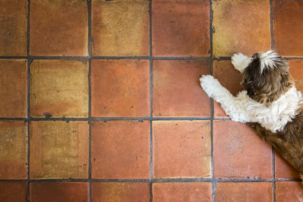 Dog lying on red Spanish Terracotta Floor Tiles