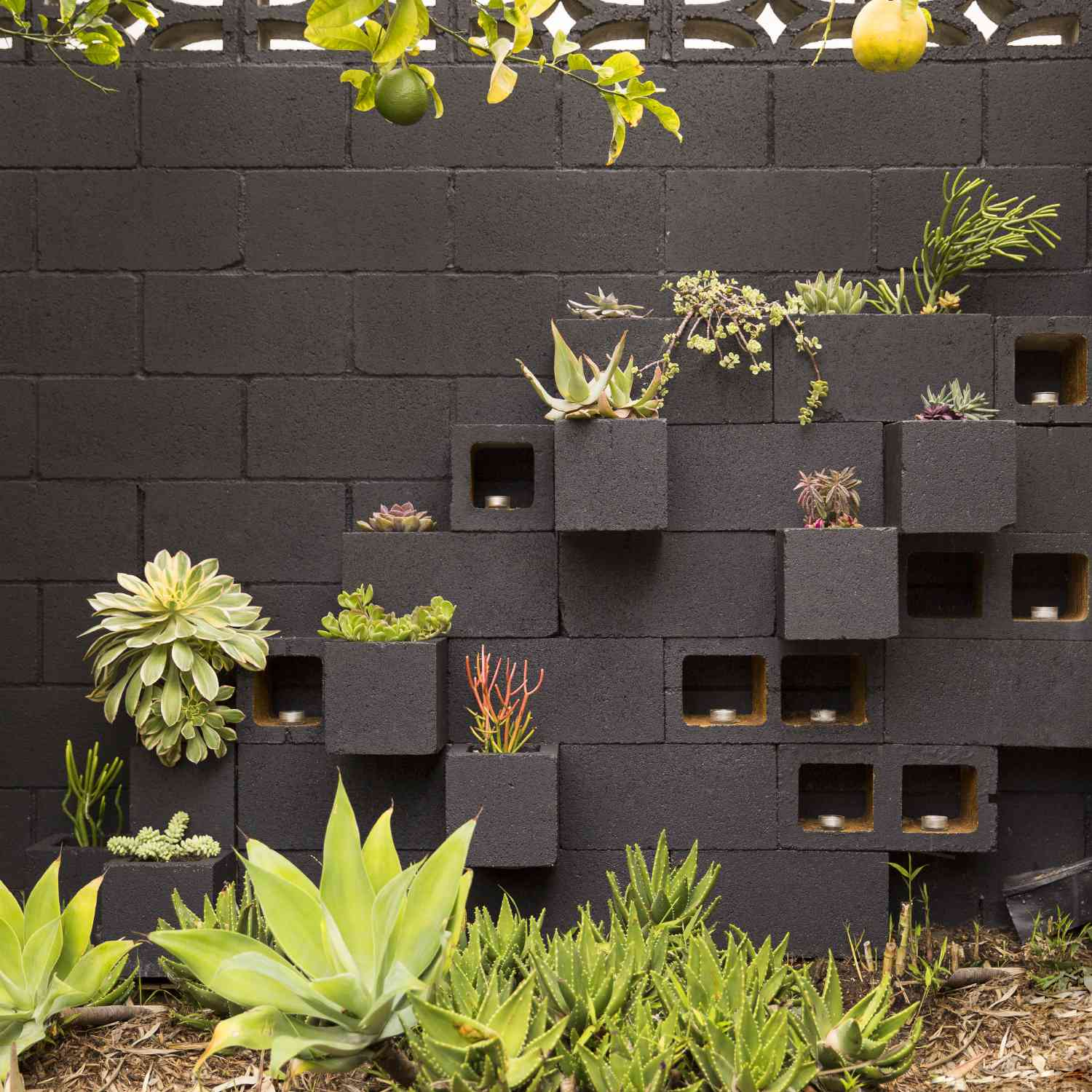 A gray cinder block wall with planters