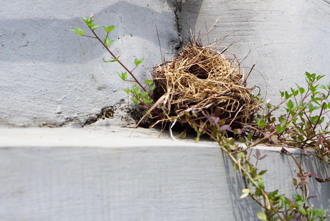 bird nest that looks like debris