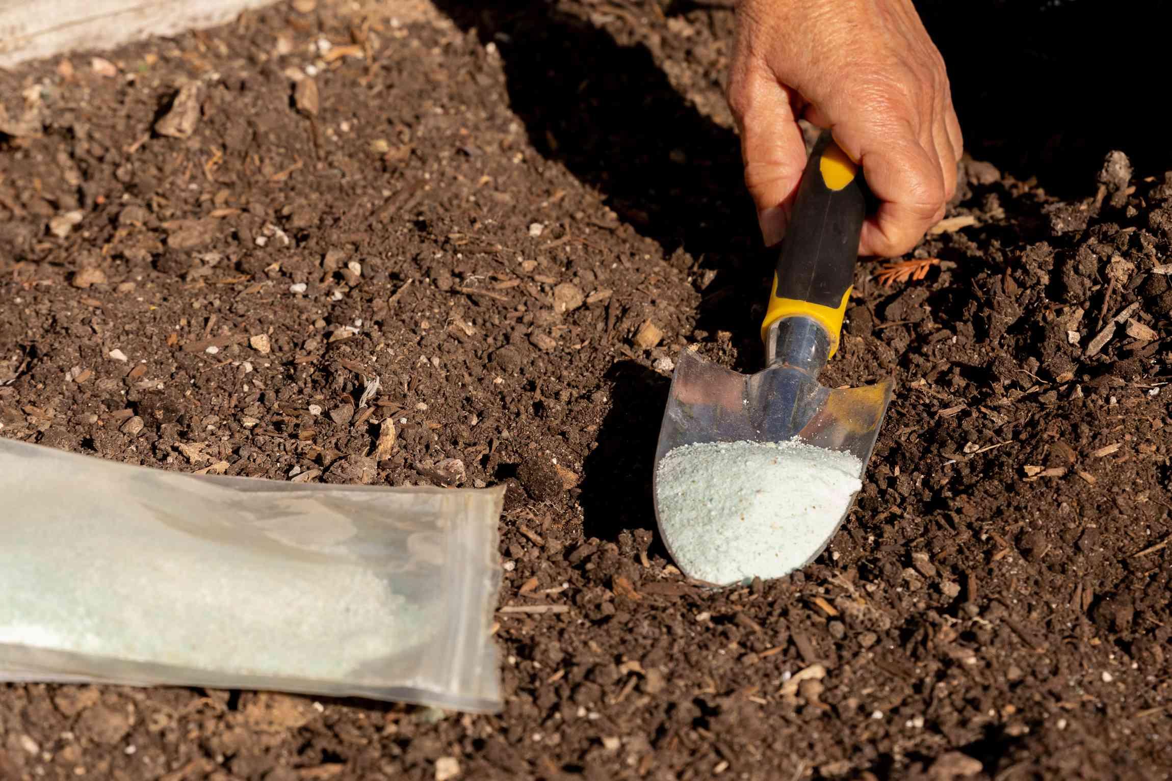 Sulfur on hand-held shovel added to soil for more acidity