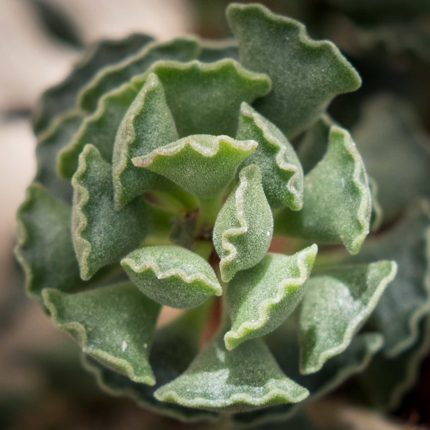 The Most Unusual Succulent Plants for Your Garden