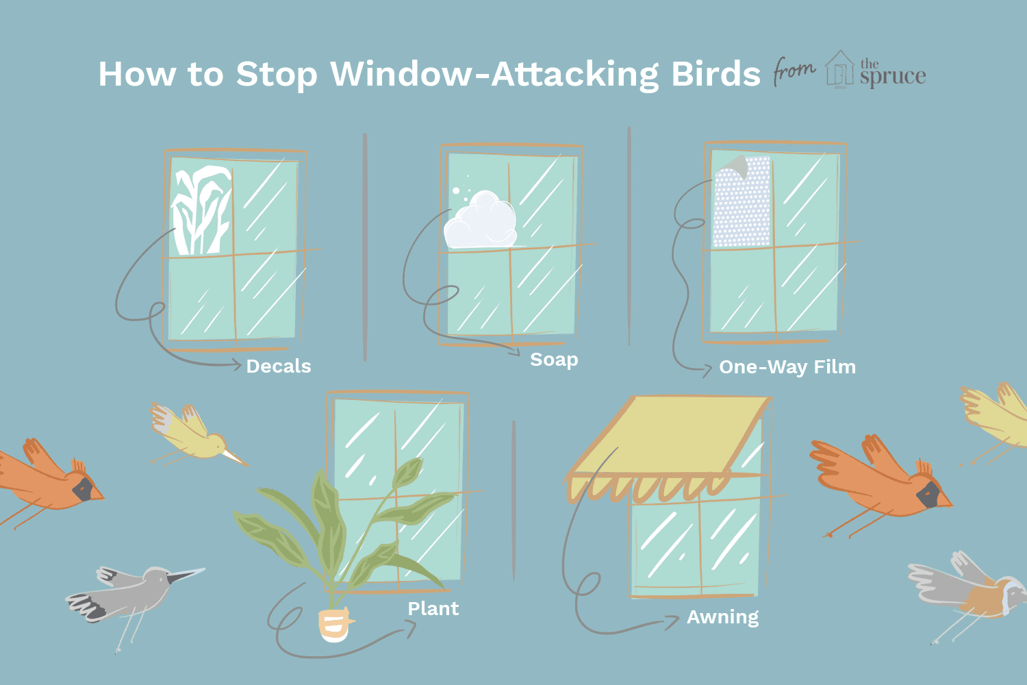 Tips to Stop Birds Attacking Windows