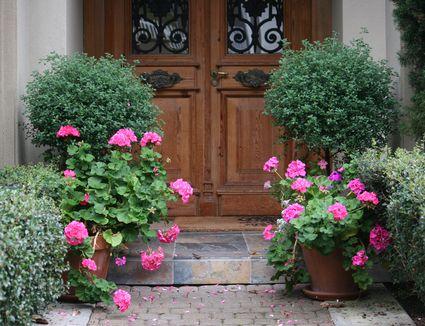 Best Evergreen Flowering Plants