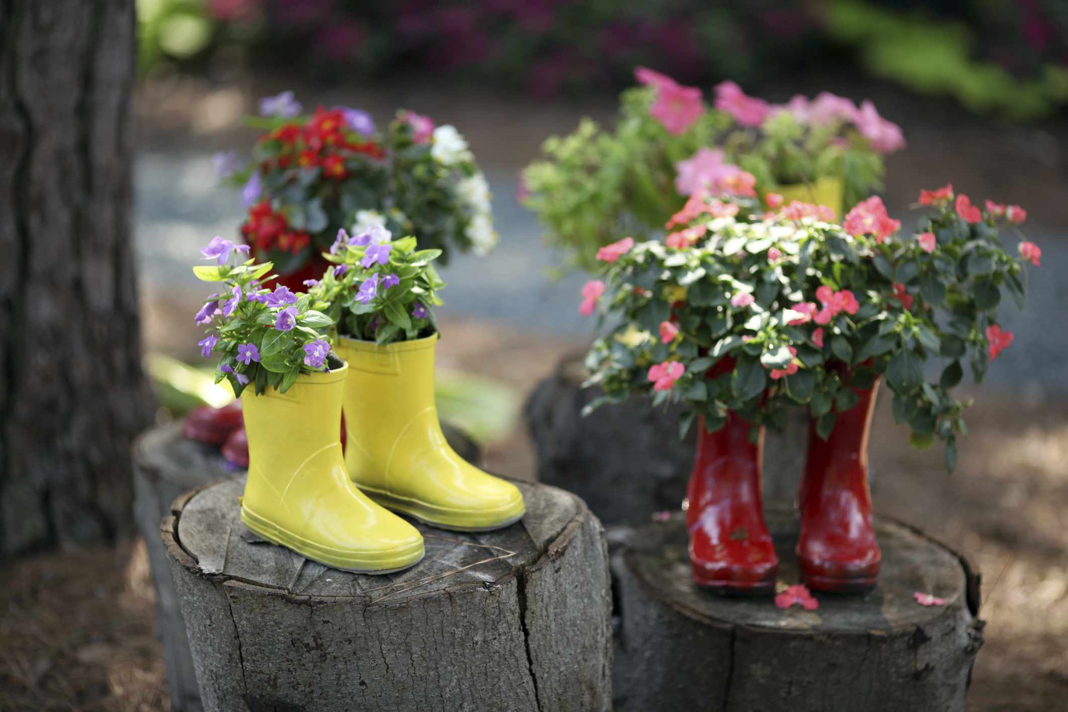 Flowering Boots