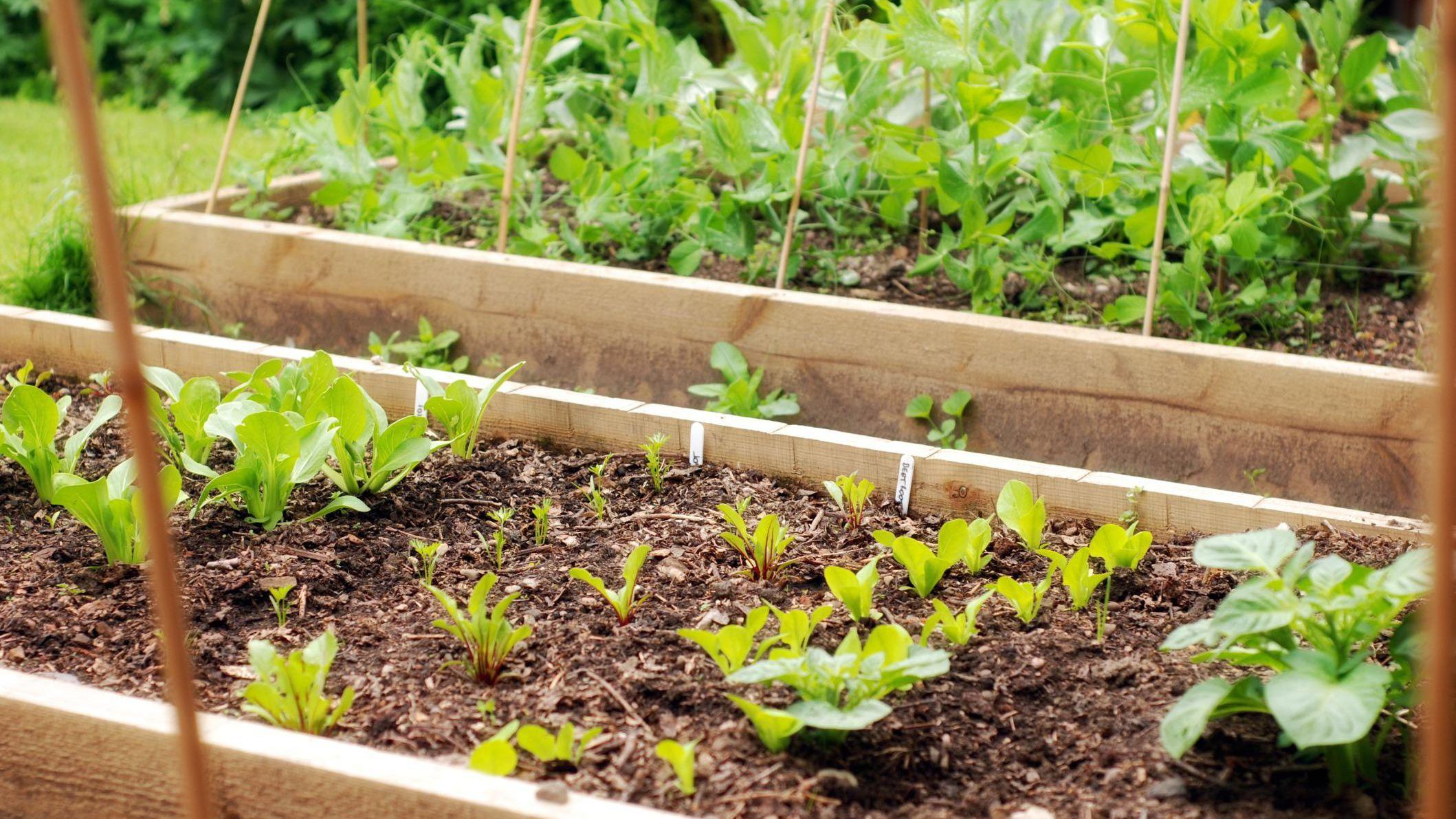 Understanding Companion Plants for Growing Potatoes on tree home furniture, tree patio, tree home design, tree interior, tree home water, tree bathroom,