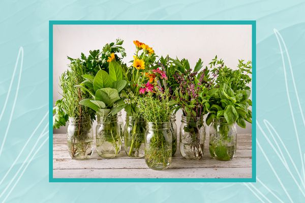 A collection of herbs in jars by gardening expert Debbie Wolfe