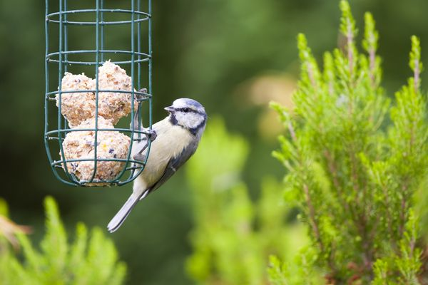 Bird eating from bird feeder