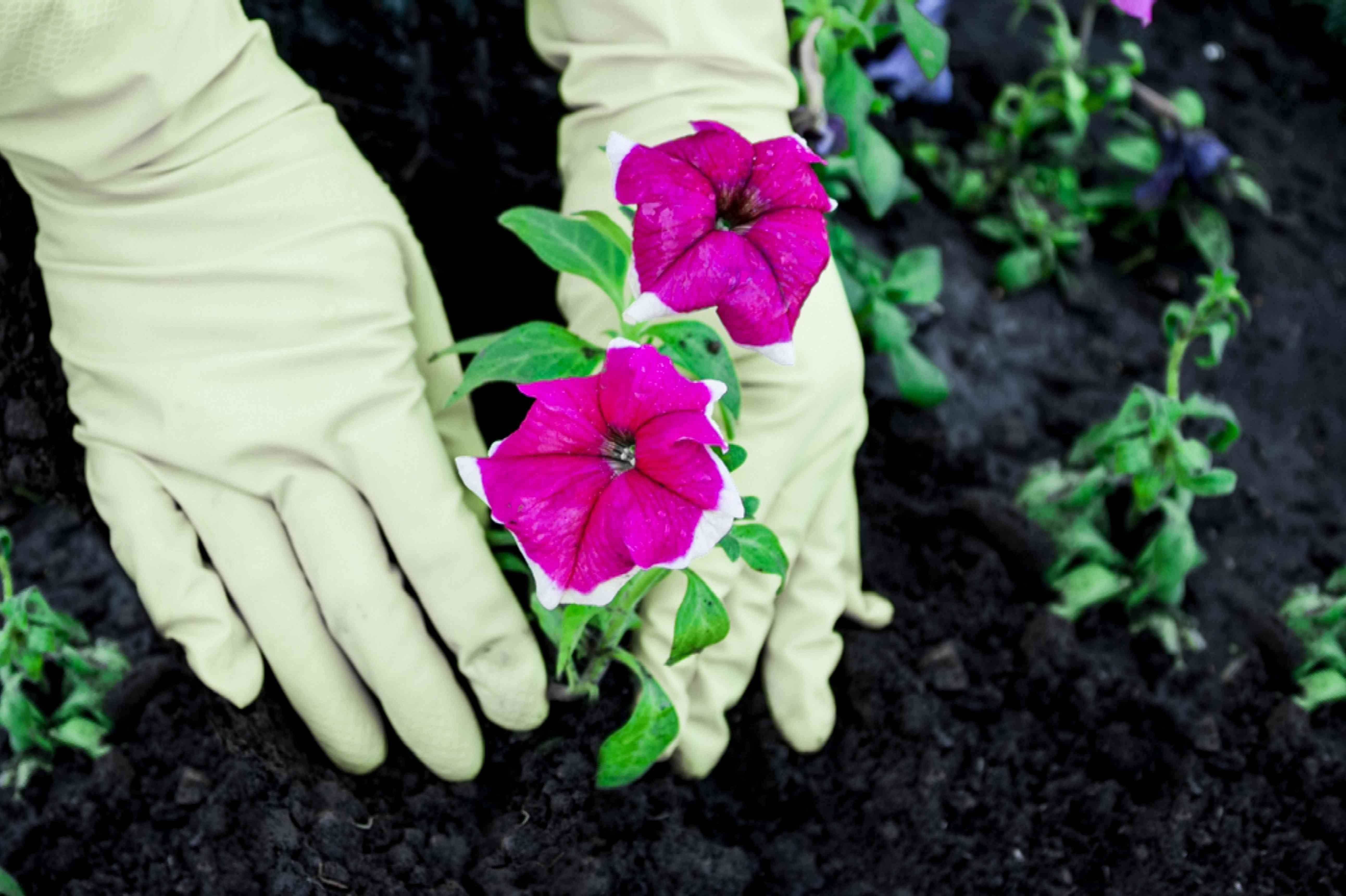 planting in a flower bed