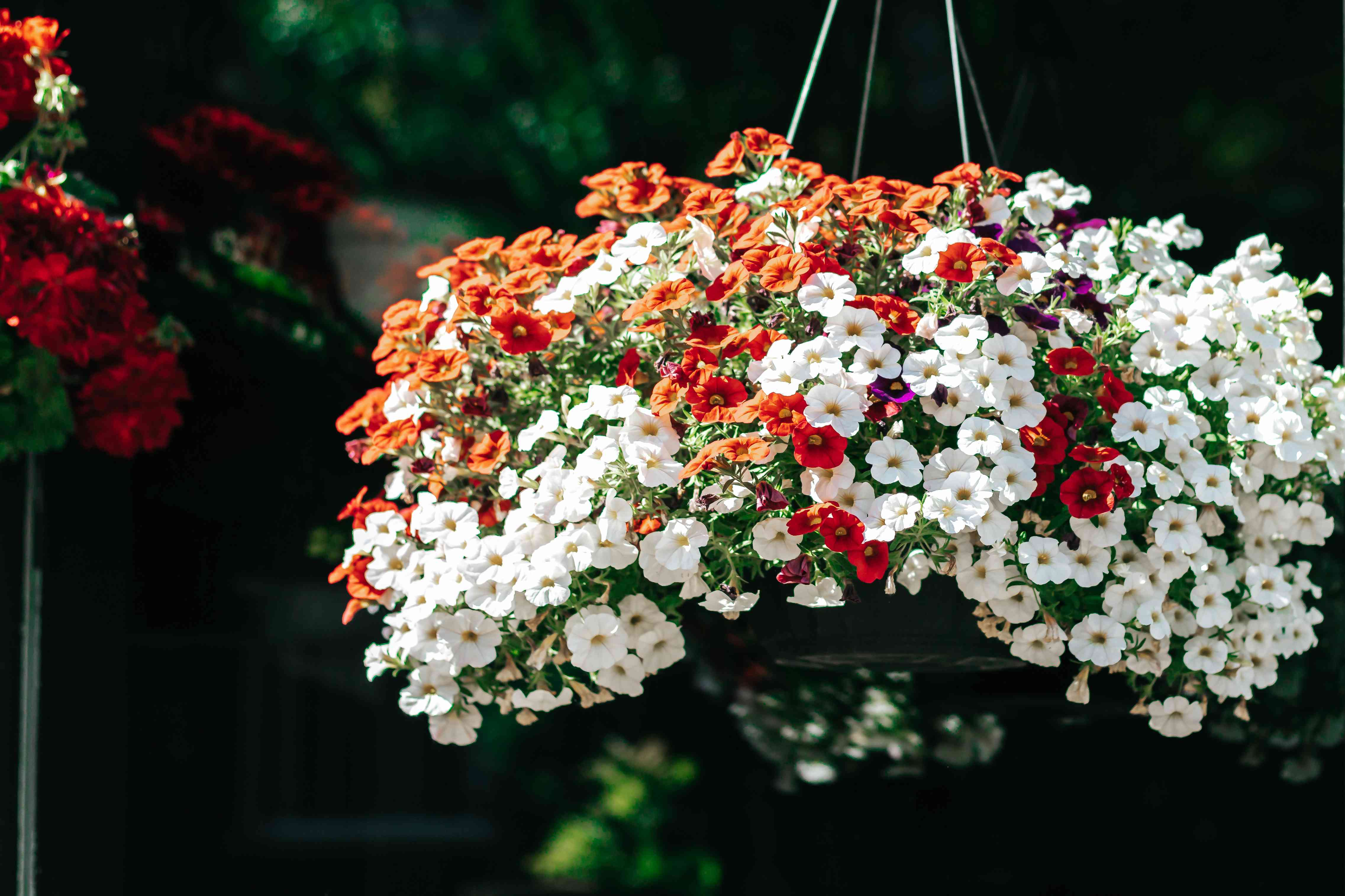 million bells in a hanging container