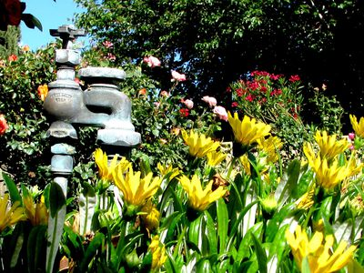 How to Troubleshoot Your Lawn Irrigation System