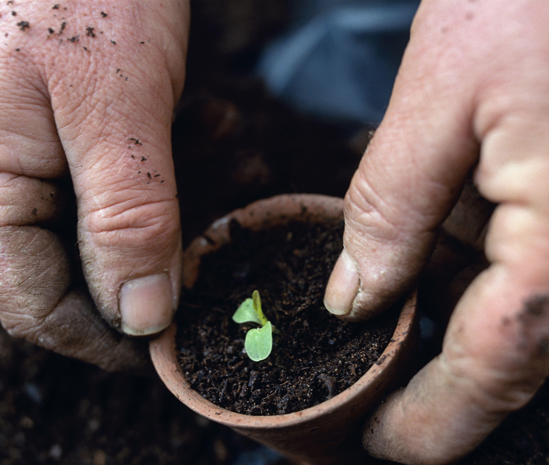 Best Feng Shui Houseplants on flowers houseplants, ornamental bamboo houseplants, palm houseplants, indoor houseplants,