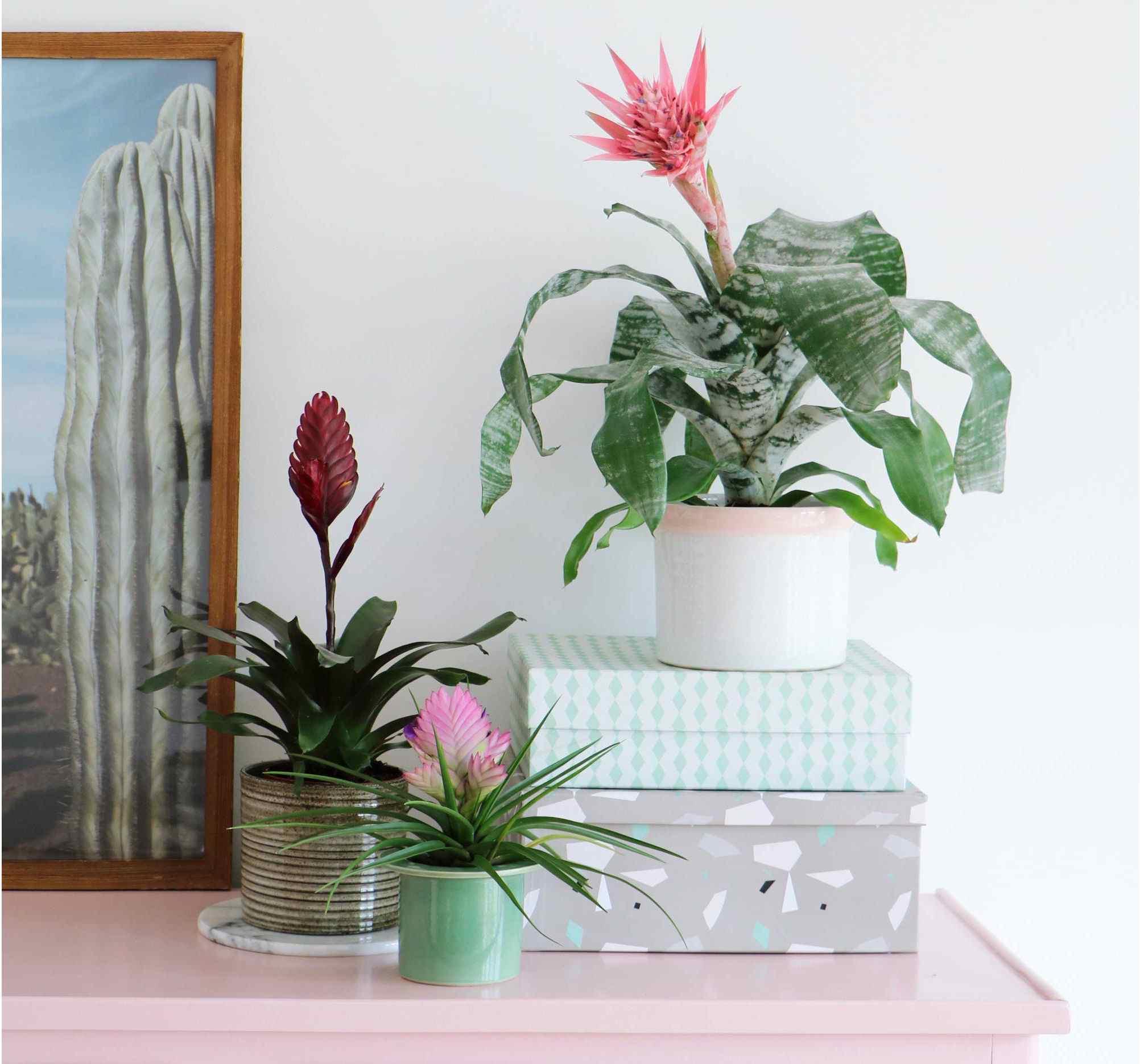 Tropical plant on dresser