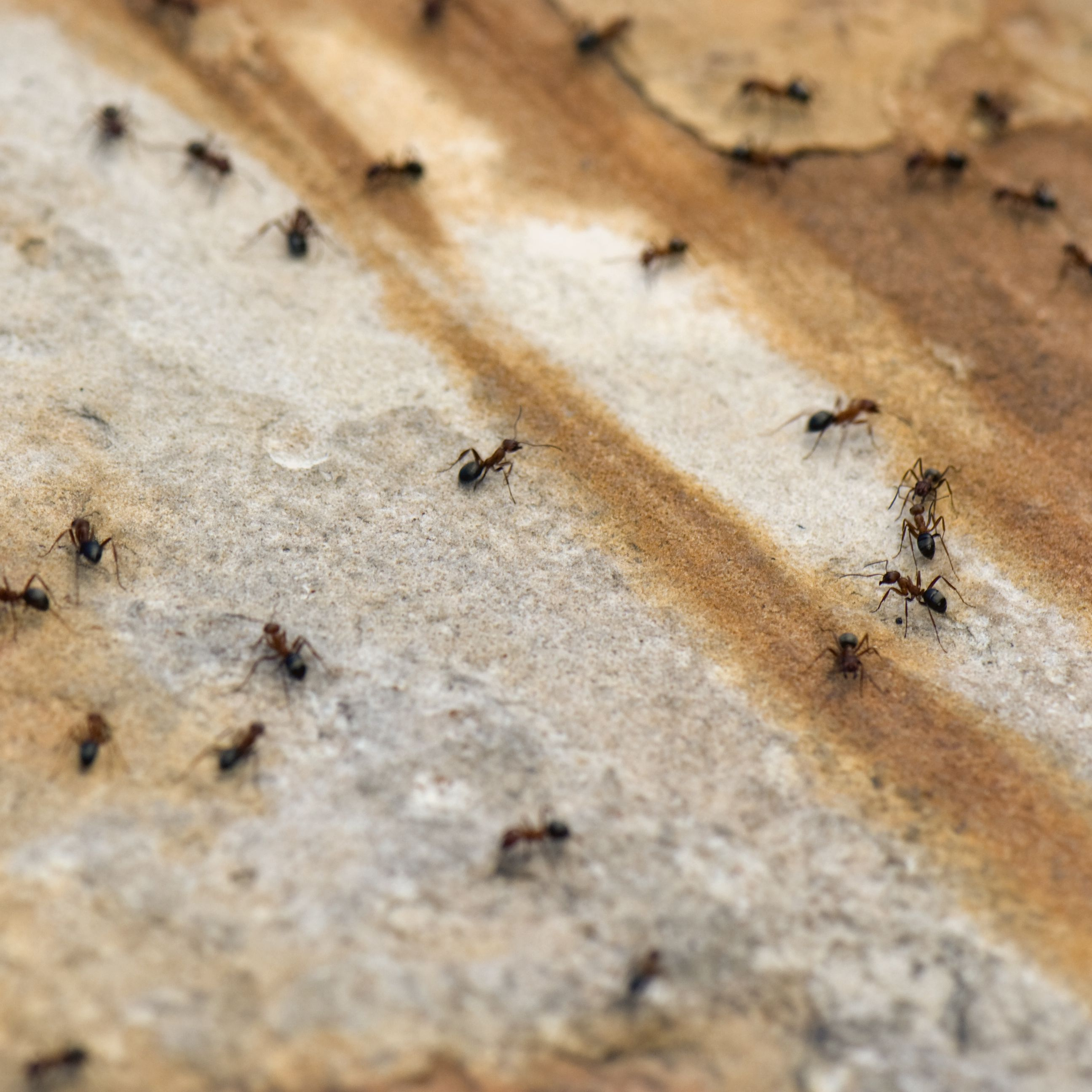How To Get Rid Of Ants Mice Flies And Spiders