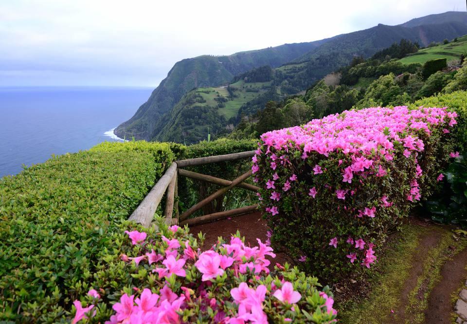 Best shrubs with pink or magenta flowers azalea shrubs mightylinksfo