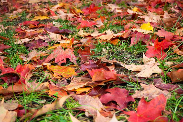 Brown, red and orange fall leaves on ground between grass blades