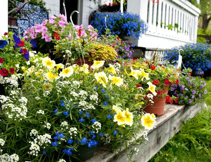 Using Annual Plants Vs Perennials