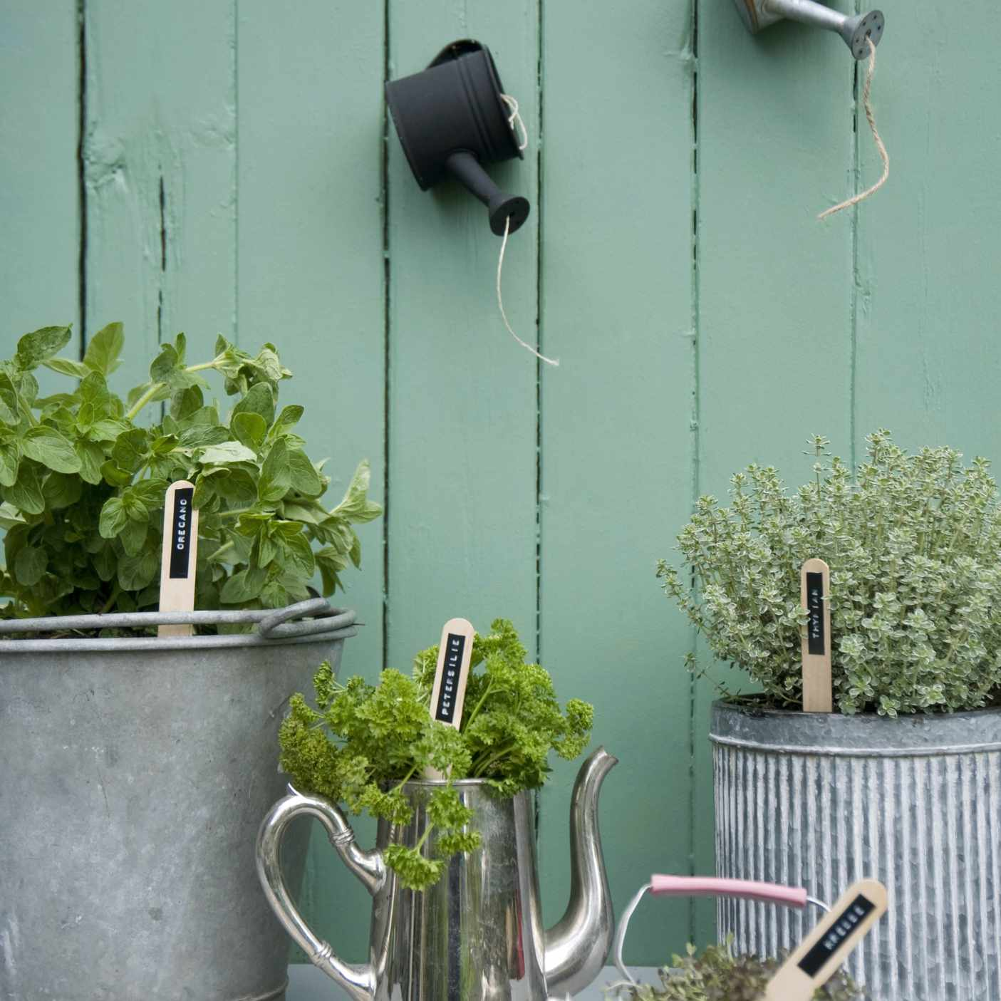 Metal planters and teapot planters filled with herbs against a light green wall.