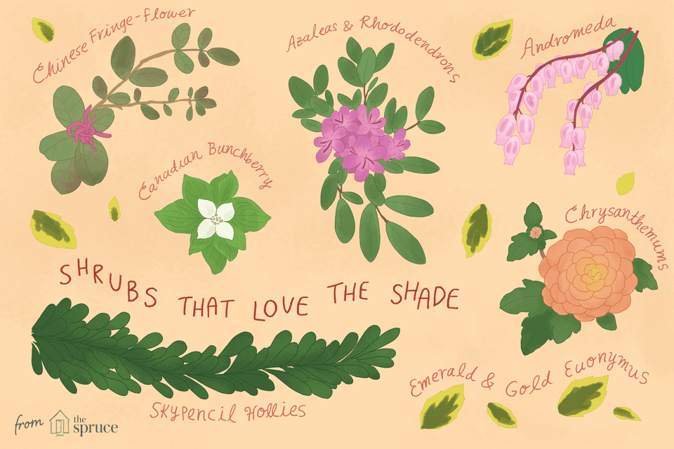 30 Best Shrubs For Shade