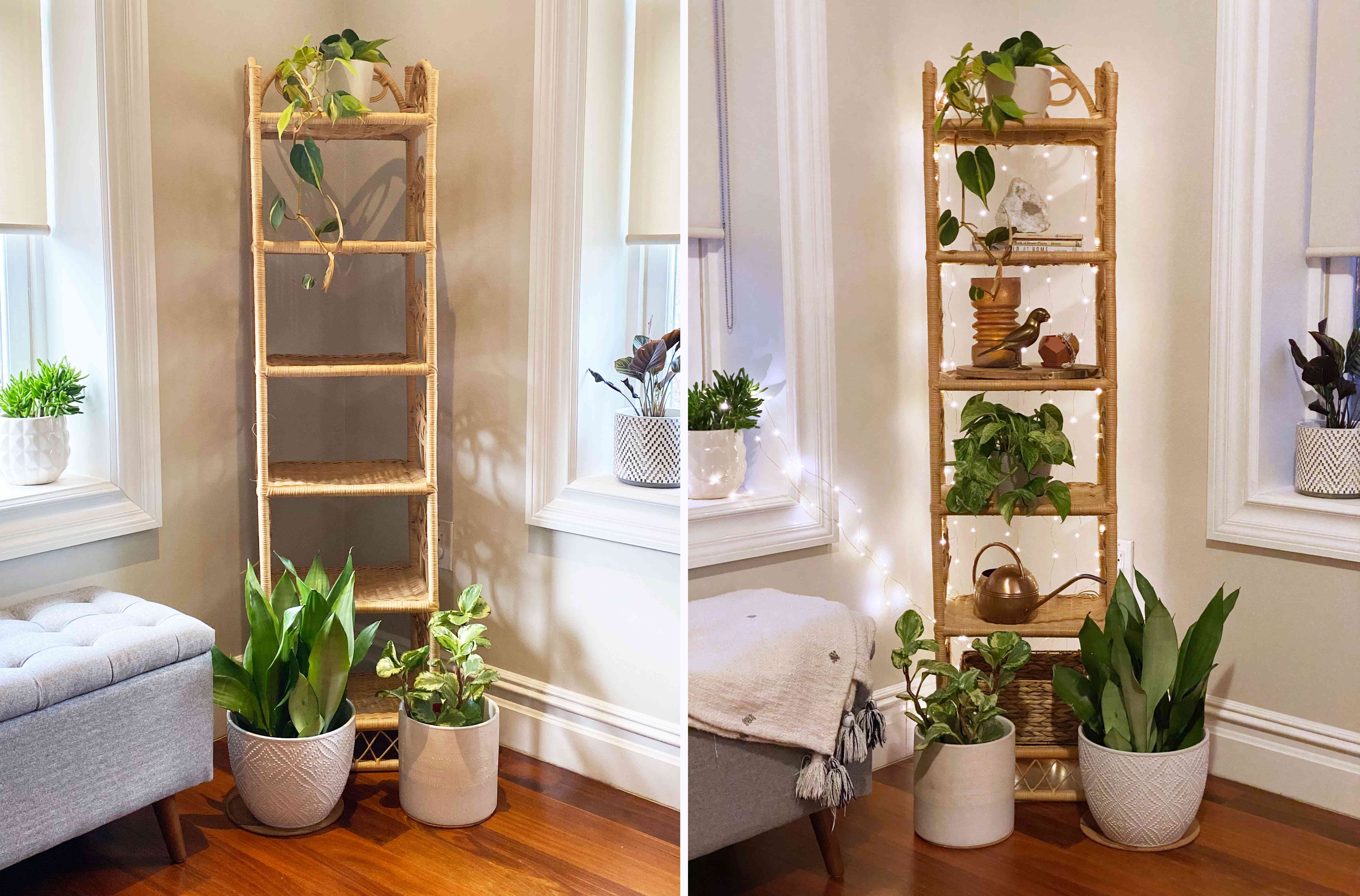 Before and after plant corner