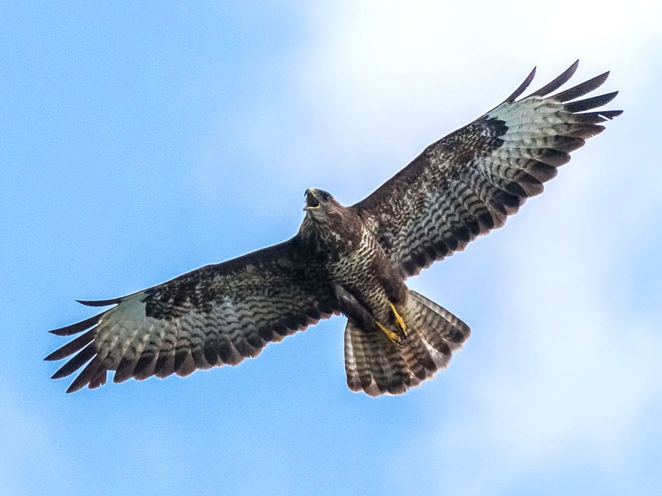 What S The Difference Between Buzzards And Vultures