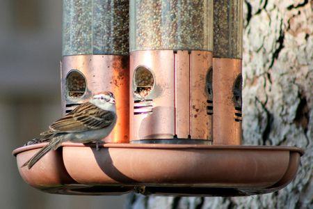 Bird At A Dirty Feeder